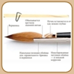 4195696_brush_anatomy (148x148, 14Kb)