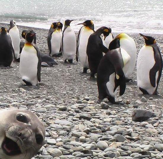 пингвины