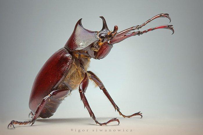 макрофото насекомые