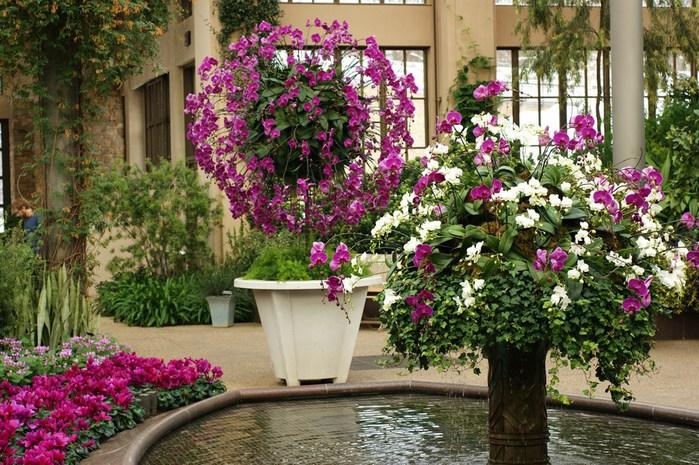 Сады Лонгвуда, Пенсильвания, США. 37123