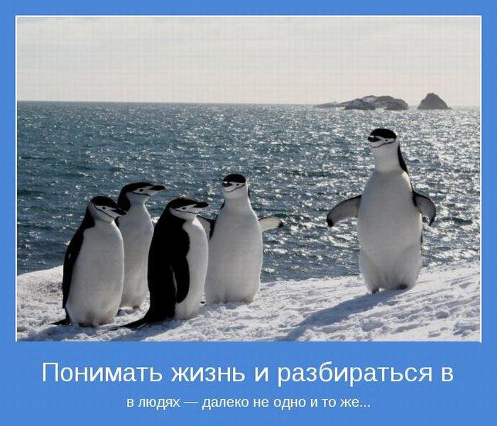3422701_1326231467_motivatory_29 (700x600, 92Kb)