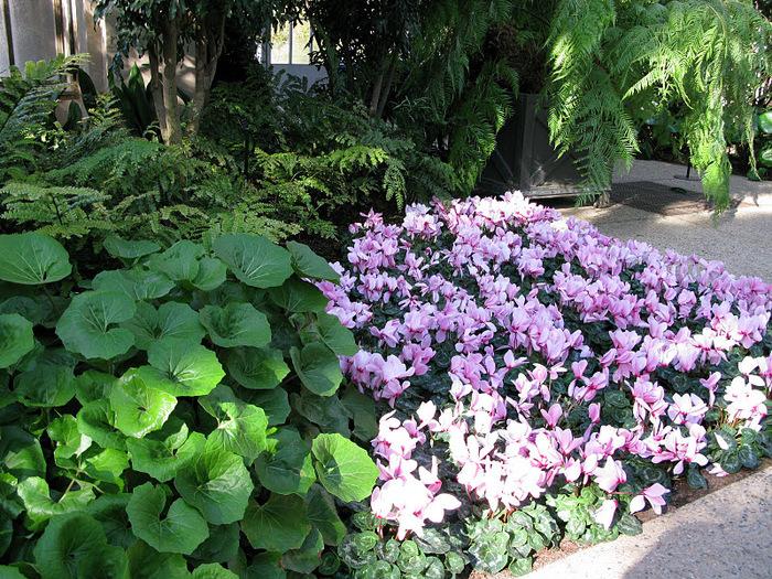 Сады Лонгвуда, Пенсильвания, США. 14796
