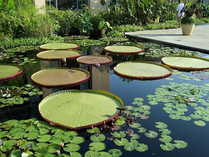 Сады Лонгвуда, Пенсильвания, США. 59124