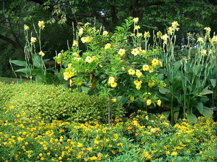 Сады Лонгвуда, Пенсильвания, США. 94828