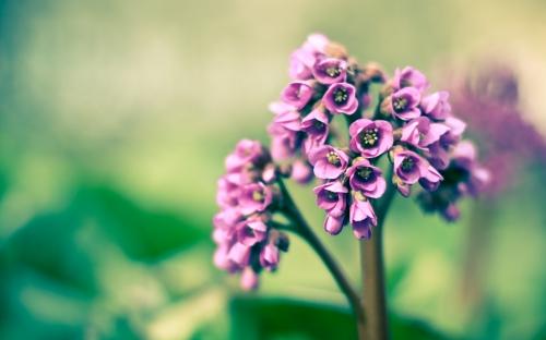 Завораживающие цветы