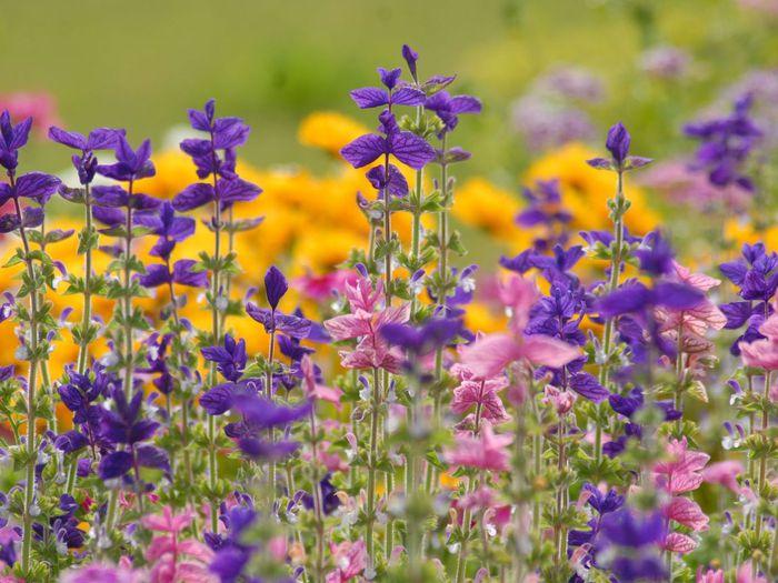 Цветы images yahoo - 2d78a