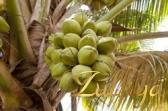 пальма1.php (168x111, 5Kb)