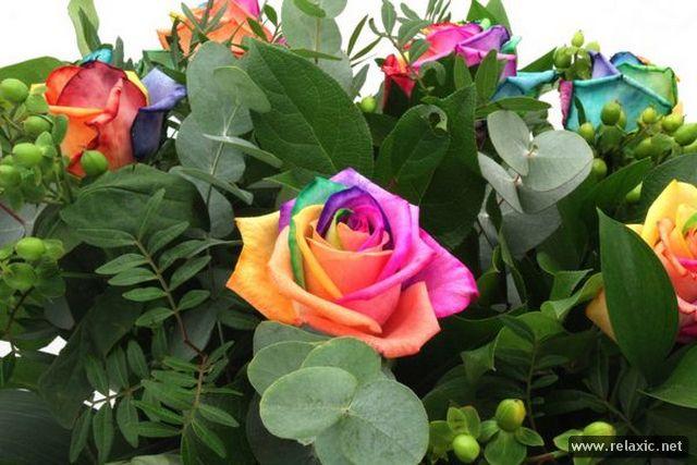 Rainbow_Flowers_021 (640x427, 56Kb)