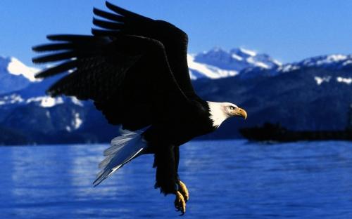 Грациозные птицы