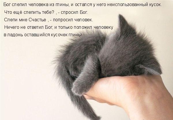 3518263_bog_sozdal_koshky (600x417, 56Kb)