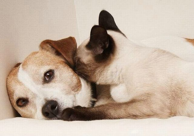 cat_and_dog_08 (640x448, 38Kb)