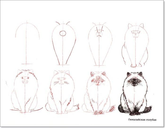 cat00008 (700x545, 133Kb)