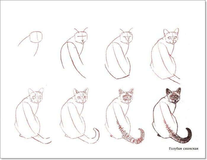 cat00010 (700x541, 122Kb)