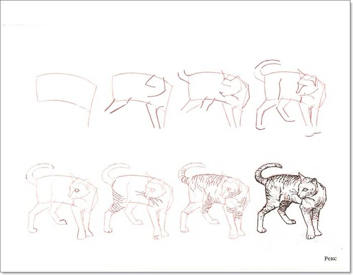 Уроки рисования акварелью и карандашом.  Коты и... Коты и кошки.  Хотите научиться рисовать портрет человека.