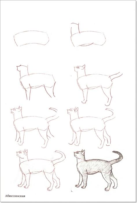 cat00018 (474x700, 97Kb)