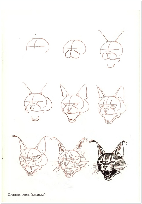 cat00032 (486x700, 116Kb)