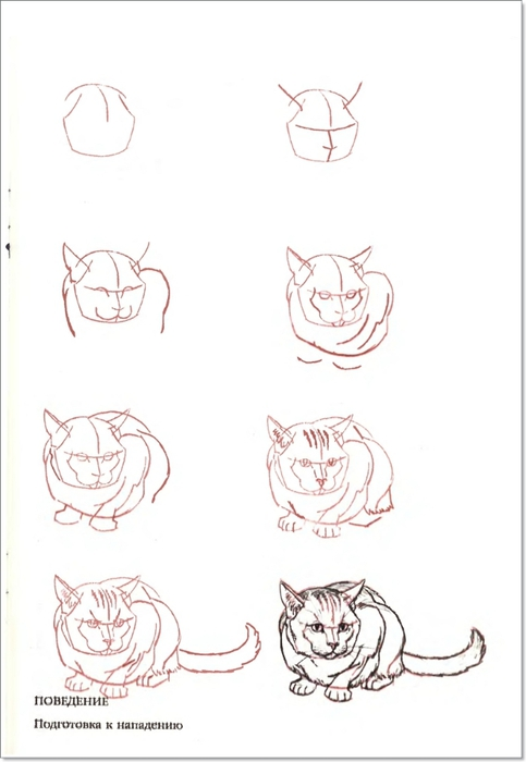cat00046 (483x700, 114Kb)