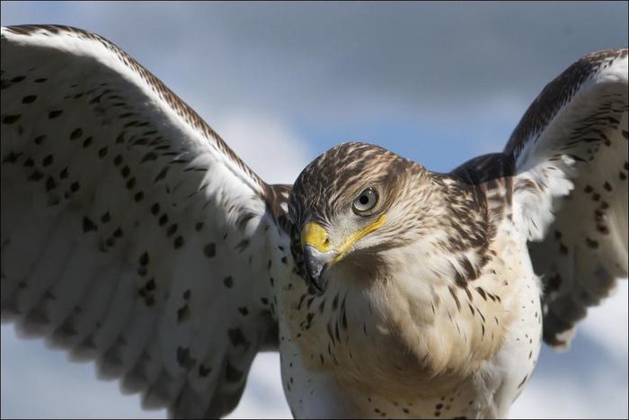 birds-04 (700x467, 35Kb)