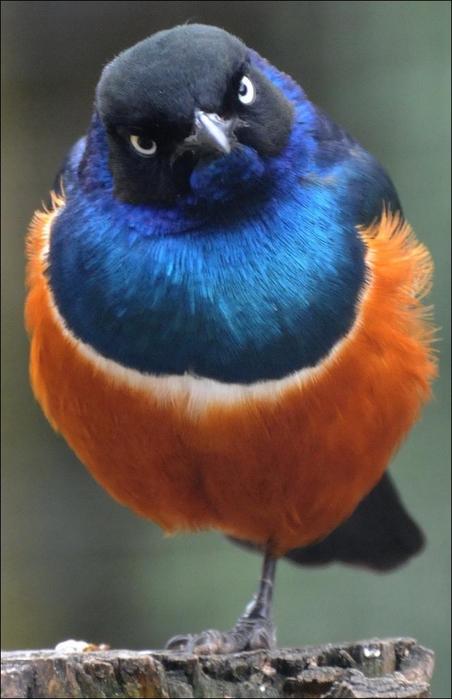birds-06 (452x700, 295Kb)
