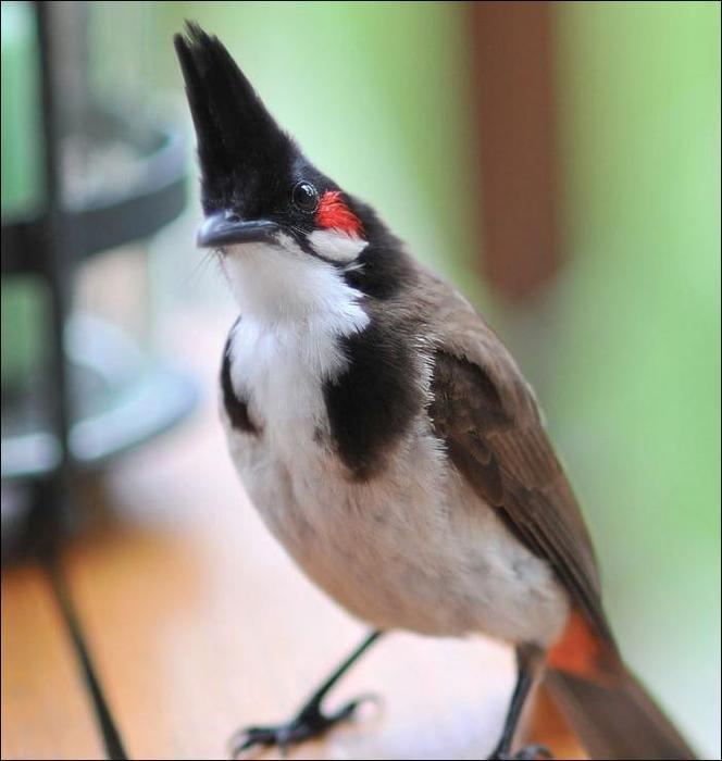 birds-18 (664x700, 38Kb)