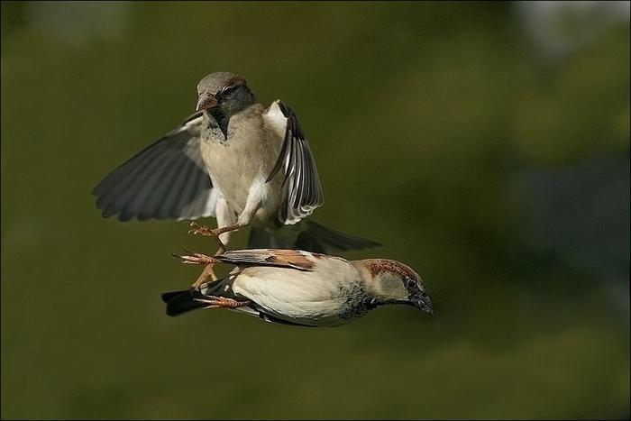 birds-40 (700x467, 23Kb)
