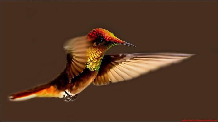 birds-45 (700x394, 17Kb)