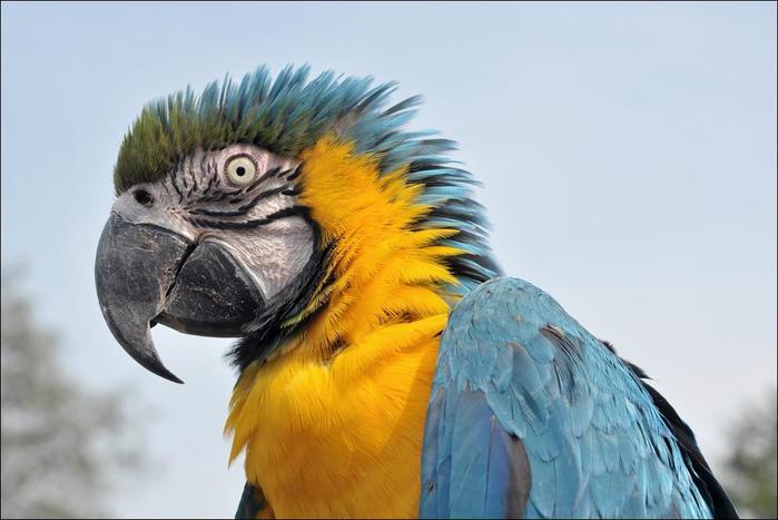 birds-50 (700x467, 40Kb)