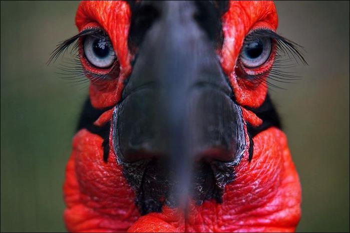 birds-56 (700x466, 39Kb)