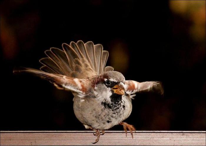 birds-77 (700x496, 33Kb)