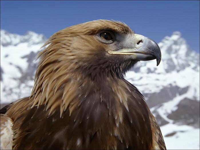 birds-88 (700x525, 45Kb)