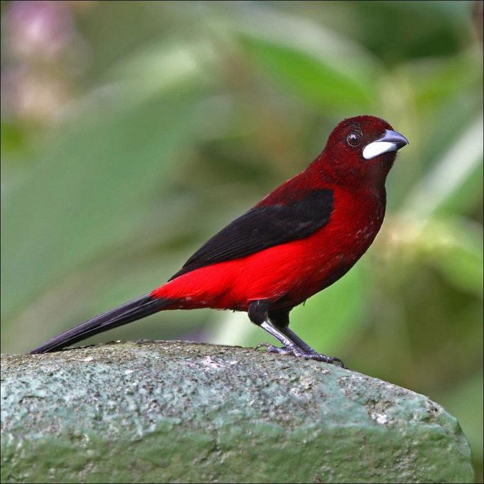 birds-101 (700x700, 417Kb)