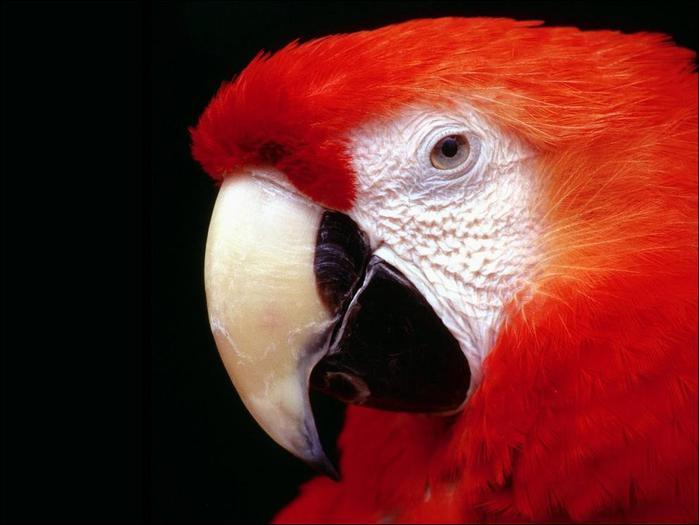birds-116 (700x525, 37Kb)