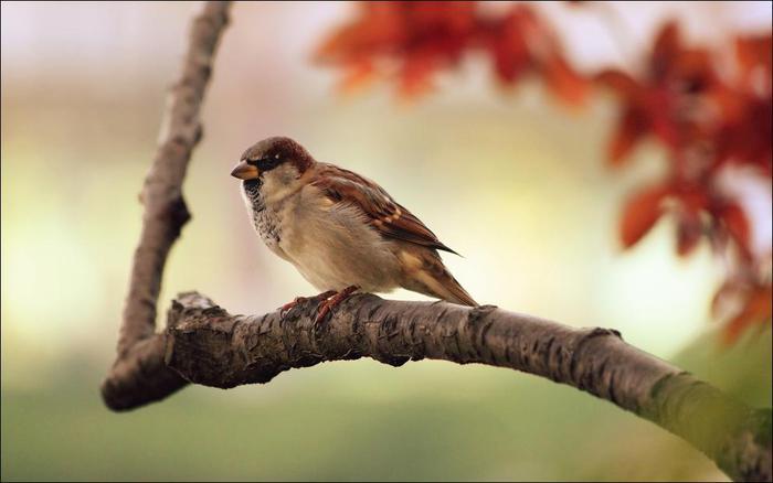 birds-127 (700x438, 30Kb)
