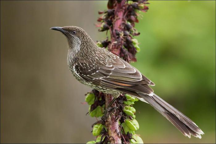 birds-136 (700x467, 37Kb)