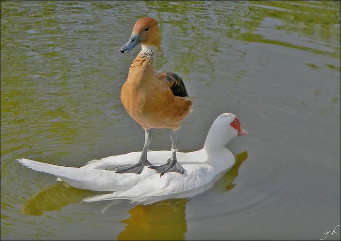 birds-142 (700x494, 39Kb)