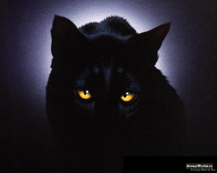 1229666834_1218026135_black_cat_den (700x557, 88Kb)