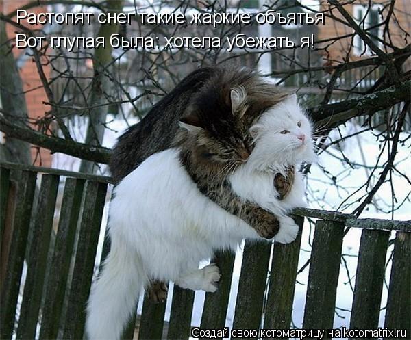 Котоматрица прикольные фото котов 7 (600x497, 68Kb)