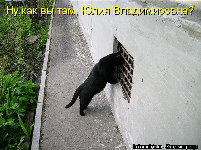Котоматрица прикольные фото котов 15 (640x480, 72Kb)