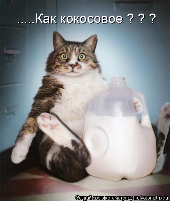 Котоматрица прикольные фото котов 20 (577x683, 40Kb)
