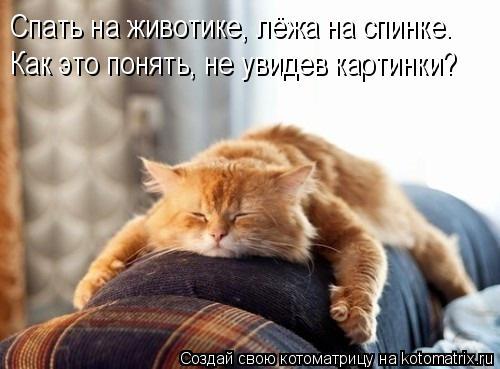 Котоматрица прикольные фото котов 28 (500x369, 33Kb)