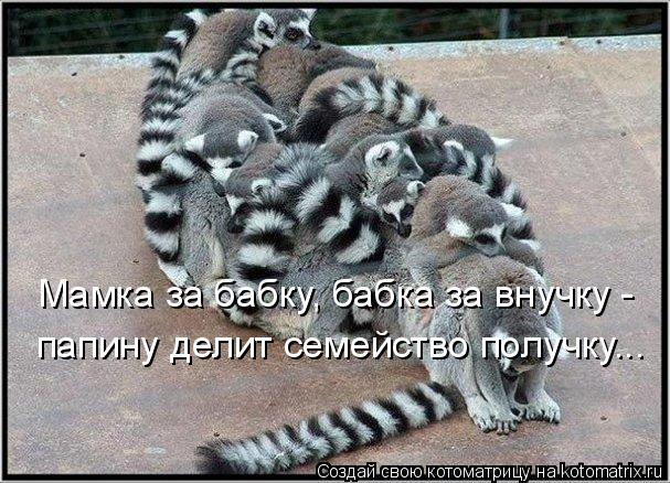 Котоматрица прикольные фото котов 30 (607x438, 77Kb)