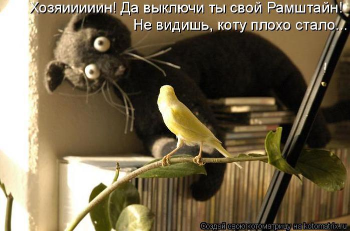 Котоматрица прикольные фото котов 33 (700x463, 46Kb)