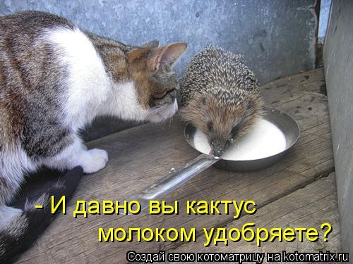 Котоматрица прикольные фото котов 35 (500x375, 46Kb)