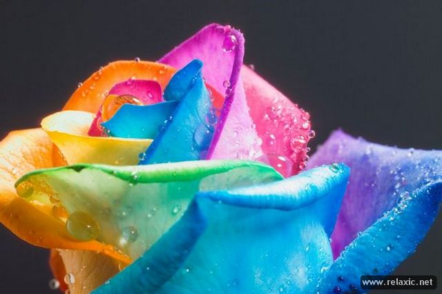 Rainbow_Flowers_011 (640x427, 37Kb)