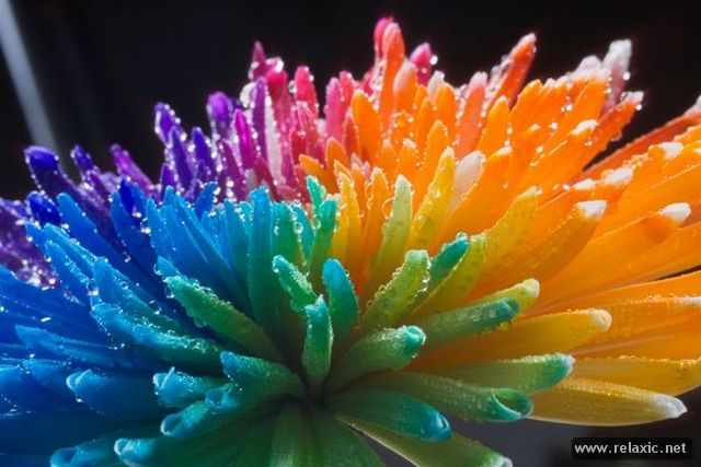 Rainbow_Flowers_013 (640x427, 50Kb)