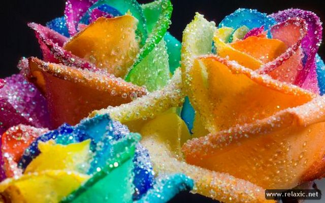 Rainbow_Flowers_015 (640x401, 59Kb)