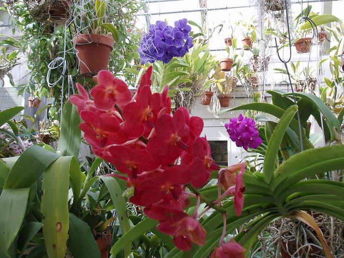 дом-музей Сады Хилвудa, Пенсильвания, США. 45525