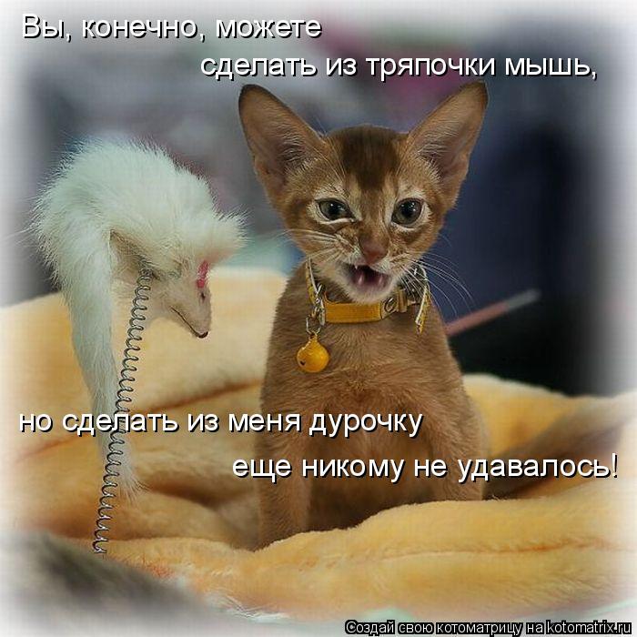 4755642_koshka1 (700x700, 73Kb)