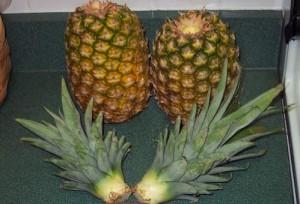 ananas3 (300x204, 22Kb)