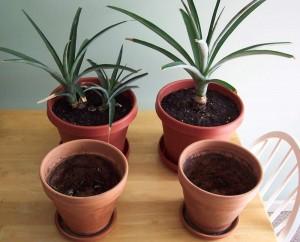 ananas17 (300x242, 22Kb)